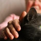 Une grand-mère se fait griffer par son chat et termine dans le coma !
