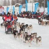 Grande Odyssée 2014 : 400 chiens s'élancent dans la course la plus difficile au monde