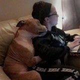 La photo d'un Pitbull reconnaissant envers son adoptante devient virale !