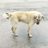 Pourquoi mon chien gratte le sol  après avoir fait ses besoins ?