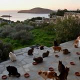 Offre d'emploi  de rêve : être payé pour s'occuper de chats sur une île paradisiaque