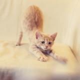 Pourquoi mon chat se fait les griffes partout ?