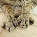 Le Canada prendra-t-il une grande décision pour améliorer le bien-être des chats domestiques ?