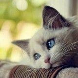 Pourquoi caresser votre chat peut être dangereux pour votre santé