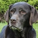 Le museau de votre chien devient gristrop tôt ? Ce peut être un signe d'anxiété!