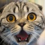 Faut-il gronder son chat quand il fait une bêtise ?