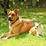 Un chien reconnaît un chien, peu importe sa race