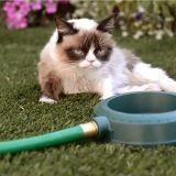 Les chats les plus célèbres du web dévoilent leur tube de l'été (Vidéo du jour)