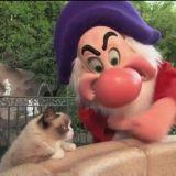 Quand Grumpy Cat rencontre Grincheux (Vidéo du jour)
