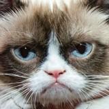 Grumpy Cat est morte à l'âge de 7 ans