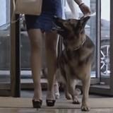 Ce chien Berger allemand coûte plus de 400 millions de dollars pour une raison totalement dingue