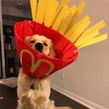 """De la """"collerette de la honte"""" à la """"collerette de la gloire"""" : les collerettes de ce chien sont devenues virales !"""