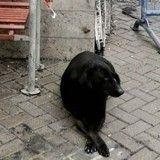 Endeuillé, un chien attend le retour impossible de son maître tué dans un attentat