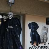 Malgré le confinement, ce refuge a organisé une fête d'Halloween que les animaux ne vont pas oublier