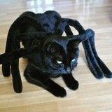 13 chats et chiens trop effrayants qui ont mieux compris que vous le concept d'Halloween