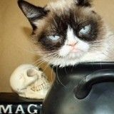 Grumpy Cat s'apprête à fêter halloween… êtes-vous prêts à voir ça ?