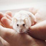 Bonpoint offre des hamsters et des lapins, et crée la polémique