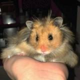 Mais qui est ce hamster qui enflamme Twitter ?