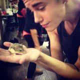 Ce hamster est une star. Pourquoi ? Il appartient à Justin Bieber !