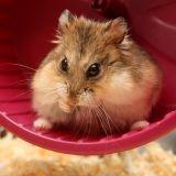 Et si votre hamster produisait de l'énergie ?