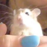 Elle jette son Hamster dans les toilettes et donne une explication qui fait beaucoup parler