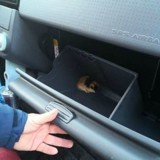 Il sauve un hamster perdu puis réalise avec surprise que ça n'en est pas un du tout