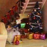 Miraculés, ces hamsters fraîchement adoptés ont passé un inoubliable Noël (Vidéo du jour)
