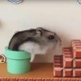 Quand un hamster termine un niveau de Super Mario Bros… dans la vraie vie ! (Vidéo du jour)