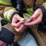 Des pompiers réaniment des hamsters avec de minuscules masques à oxygène