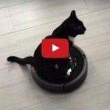 Handicapé, ce chaton s'est trouvé lui-même son fauteuil roulant idéal (Vidéo du jour)