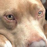 Deux ans après s'être fait voler son chien, elle parcourt 960 km dans l'espoir de le retrouver ! (Vidéo)