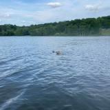 Son Goldendoodle est introuvable : il est pris de stupeur quand il voit ce qu'il se passe dans le lac (vidéo)