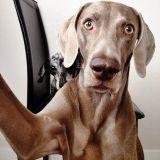 Harlow, le chien mégalo qui adore se prendre en photo !