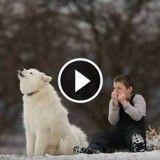 Un enfant joue de l'harmonica et son chien fait le choriste : un duo adorable ! (Vidéo du jour)