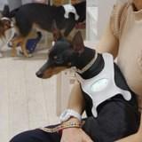 Grâce à ce harnais connecté révolutionnaire, vous pourrez connaitre l'humeur de votre chien !