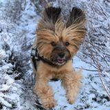 Testez gratuitement le multi harnais canin Animalin !