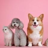 French Days Cdiscount : profitez des bons plans pour votre chien et votre chat