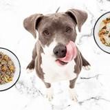 Pepette : on a testé la livraison de ration ménagère pour chien et on vous donne notre avis