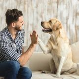 Comment renforcer les défenses immunitaires de son chien pour l'hiver ?