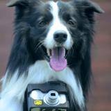 Heartography, l'appareil pour chiens qui prend des photos avec le coeur