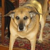 Témoignage : le bouleversant hommage d'une femme à la chienne qui a changé sa vie