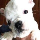 Herbie, l'adorable chiot qui se bat pour tenir debout