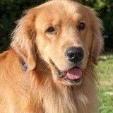 Ce chien a cassé une vitre pour sauver la vie de sa propriétaire
