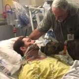 Le Boxer entre dans la chambre d'hôpital de son maître mourant : sa réaction met les larmes aux yeux (Vidéo)
