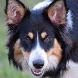 15 chiens et chats trop heureux d'avoir été adoptés