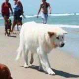 Les 7 choses qui prouvent que les vacances, c'est mieux avec un chien !