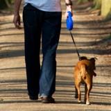 Un homme de 80 ans sort promener son chien : quand il revient, il pense avoir une hallucination