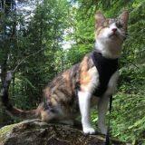 Honey Bee, un chat aveugle avide d'aventures et de découvertes (Vidéo du jour)