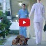Le chien de cette vidéo poignante va vous sensibiliser au don d'organes (Vidéo du jour)