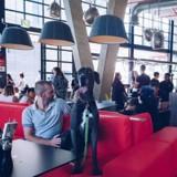 Le plus grand hôtel de chiens au monde est en… Afrique du Sud !
